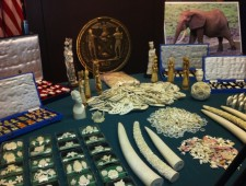 New Jersey passes historic ban on ivory sales