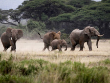 In the race to save the elephants will the US or China step up first?
