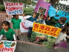 Hong Kong public supports ivory ban