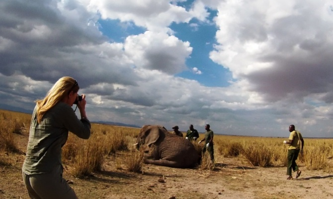 saving_the_wild__big_life_elephant_rescue__ (2)