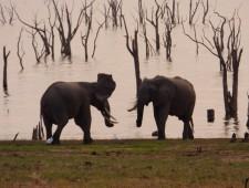 World Elephant Day: Zimbabwe's unsung eco-warriors