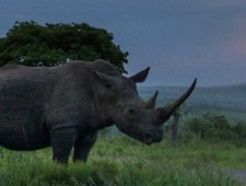 Minister's response to alleged rhino poaching kingpin