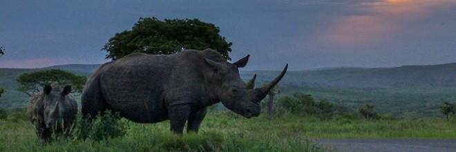 Minister's response to alleged rhino poaching kingpin
