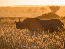 Thomas D. Mangelsen's 'art as a force for good' is saving rhinos