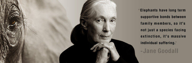 jane goodall - save the elephants