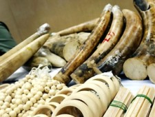 Hong Kong customs seize HK$7.9 million worth of ivory