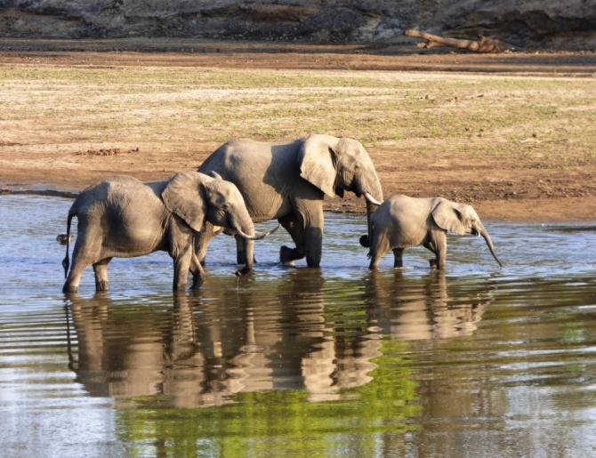 elephants_luangwa_valley_mfuwe