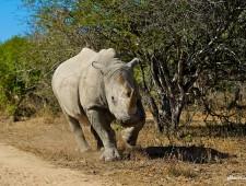 #2016YearOfTheRhino – The Game Changers