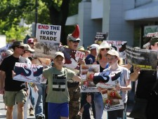 Action plan post the Global March for elephants and rhinos
