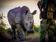 Best of Saving the Wild (part 1)