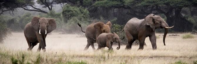 Savingthewild Com Africa S Poaching Crisis Saving The Wild