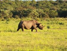 2016: Year of the Rhino