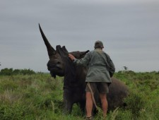 South Africa rejects rhino horn legalization