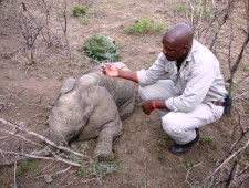 EXCLUSIVE: The amazing Thula Thula baby elephant rescue