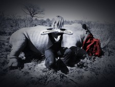 Rhino crisis: What we need is a revolution