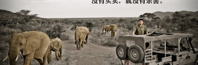 Thomas D. Mangelsen's 'Amboseli Crossing' to be auctioned at WildAid Gala