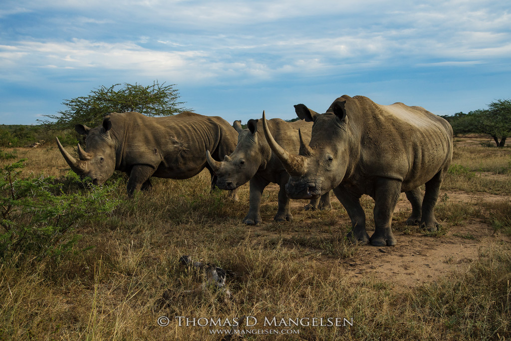 mangelsen_saving_the_wild_home_of_the_white_rhino