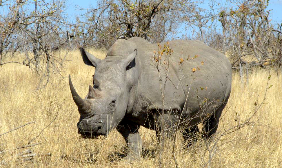 kruger_rhino_killed_16-07-18