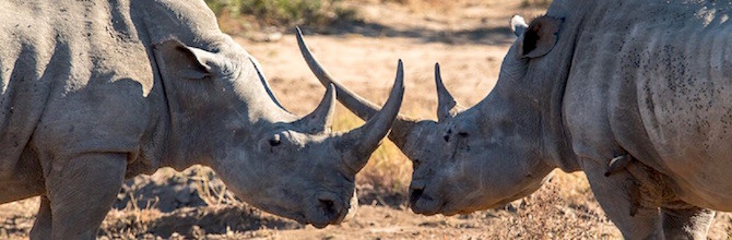 Rhino poacher who shot at Kruger helicopter sentenced to 33 years in jail