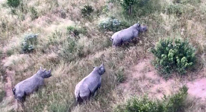 kruger-rhinos-from-the-sky