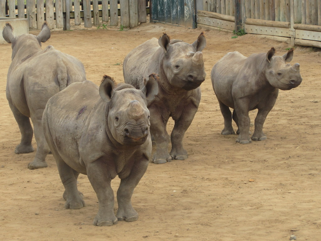 awv-4-black-rhino-orphans