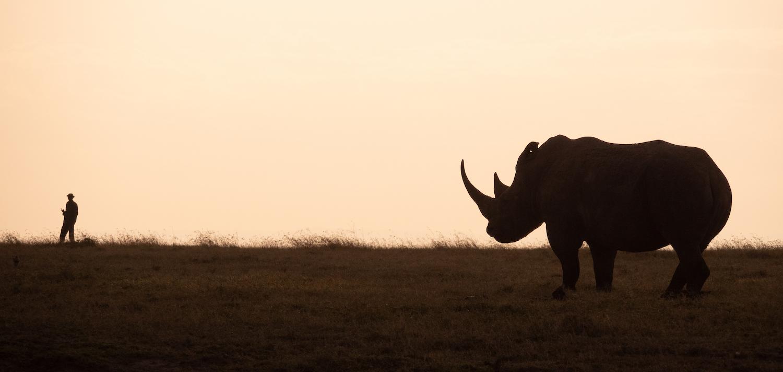All images © Saving the Wild | Simon Lucas
